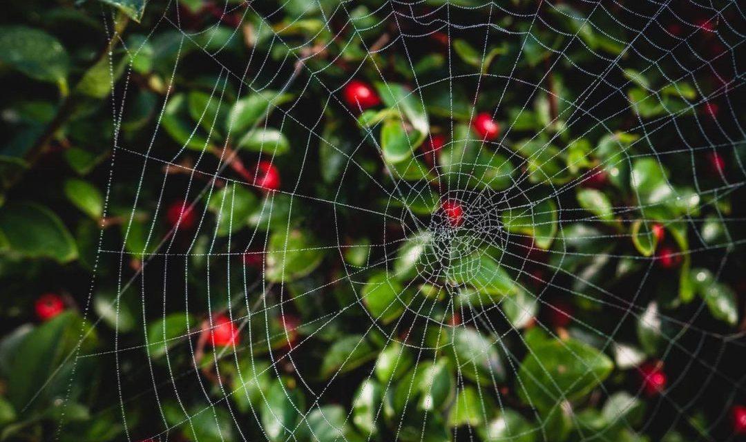 L'impazienza del ragno, ovvero i Topic Cluster e le nuove regole di Google