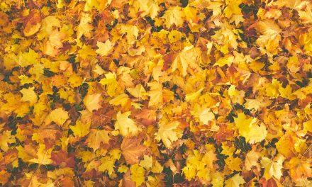 Dalle foglie cadute alla carta: RE-Leaf Paper