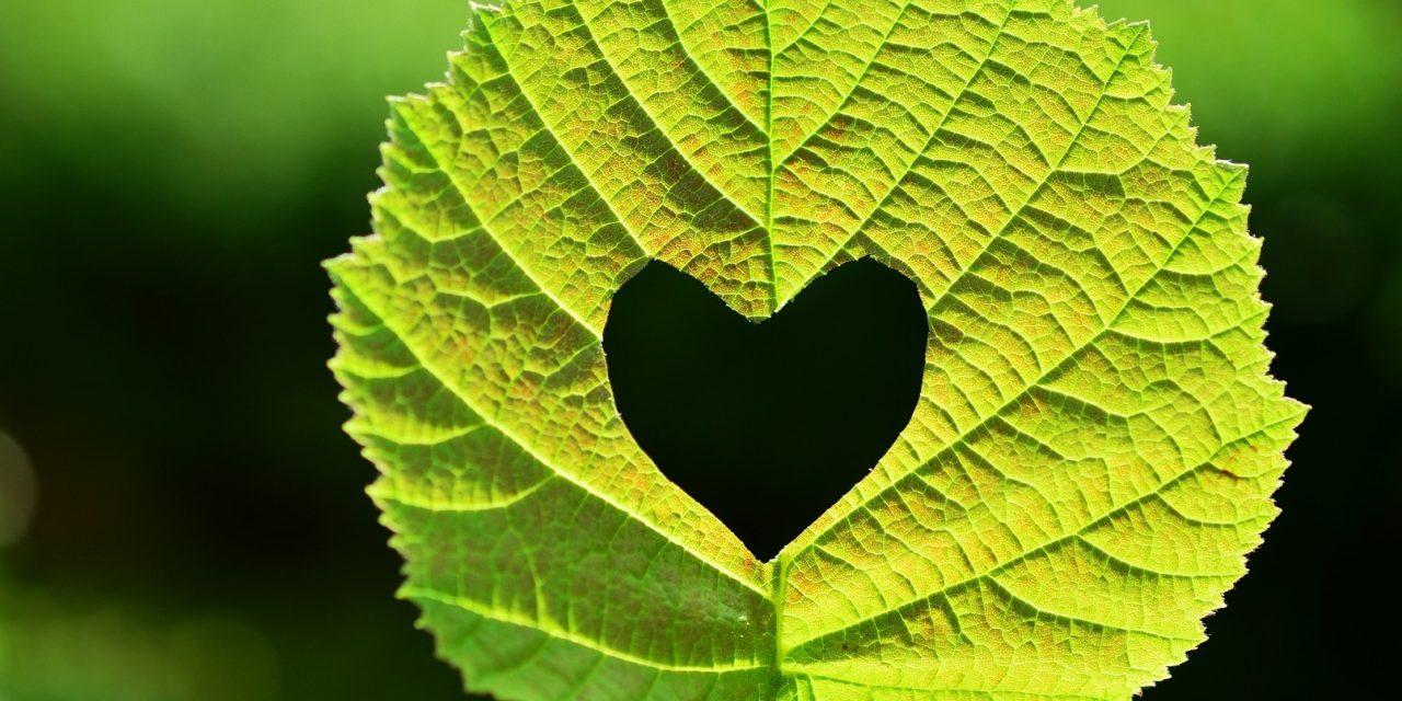 Ecologia del desiderio: l'ambiente non può fare a meno del marketing